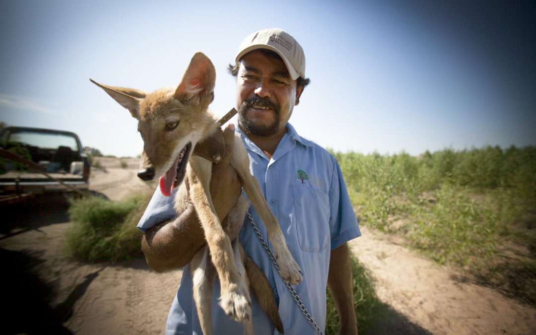 Héctor Patiño, con un coyote, en la zona de reforestación Colonia Miguel Alemán.