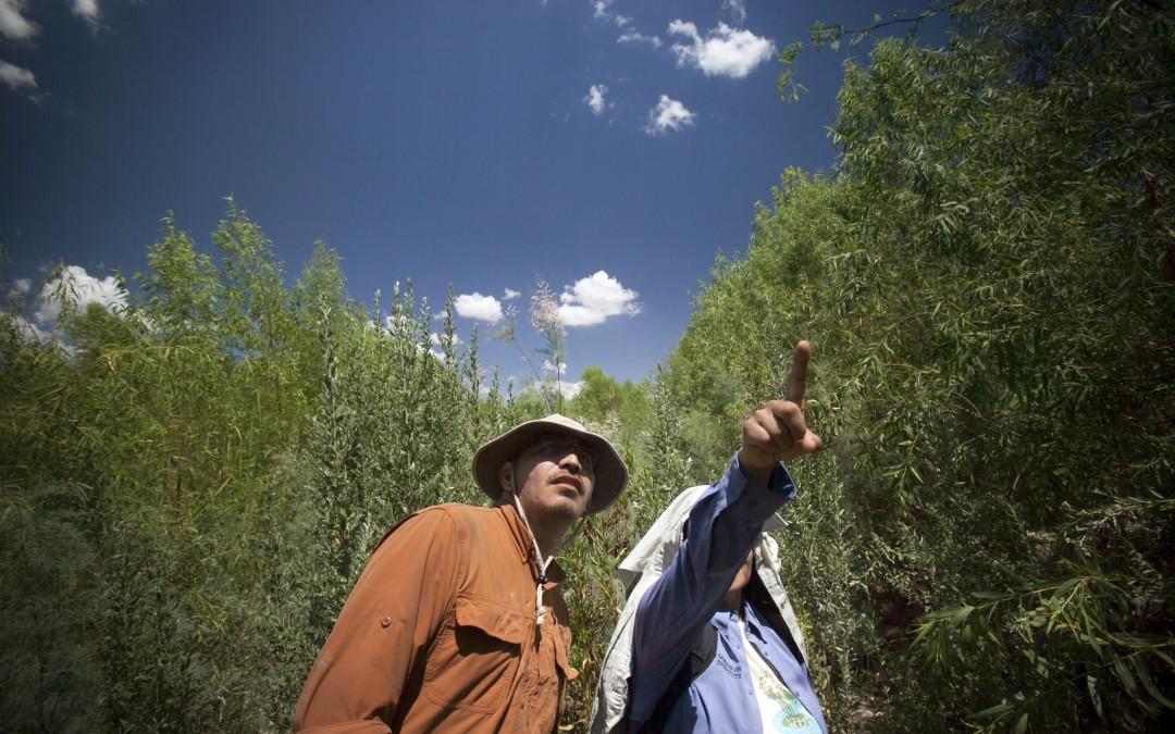 Zona de reforestación de Laguna Grande en la que trabaja Sonoran Institute.
