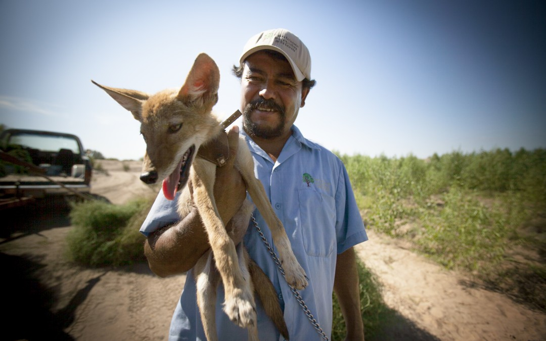 Héctor Patiño holds a coyote in Colonia Miguel Alemán, a reforestation area.