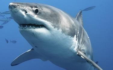 Tiburones: ¿Quién muerde a quién?